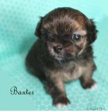 Baxter-2-5-13-17
