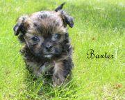 Baxter-2-5-21-17