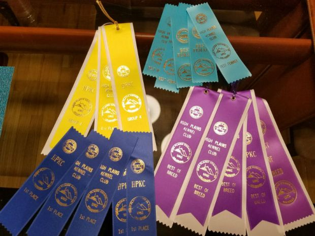 Mi-ki-UKC-dog-show-Brighton-ribbons