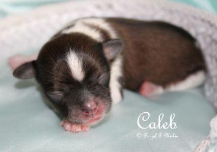 Caleb-1-c