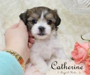 Catherine-2-3-18-a-sm