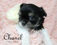 Chanel-2-3-18-e-sm