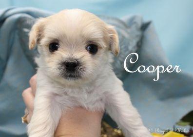 Cooper-2-3-18-f-sm