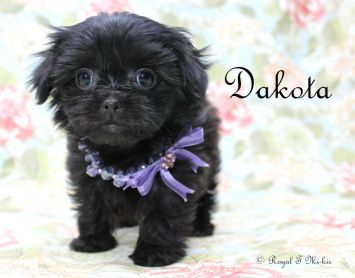 Dakota-2-25-18-e-sm