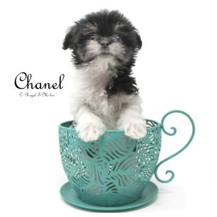 Chanel-teacup-sm-3-3-18