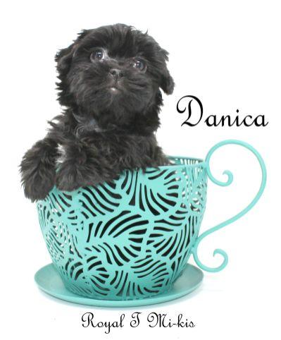 Danica-teacup-3-10-18