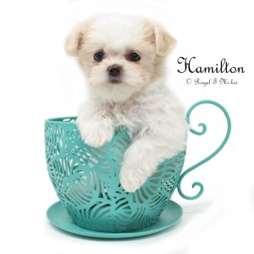 Hamilton_mi-ki-puppy_20181007-1c
