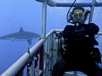 Roy Orbison Jr shark diving in Guadalupe, Mexico