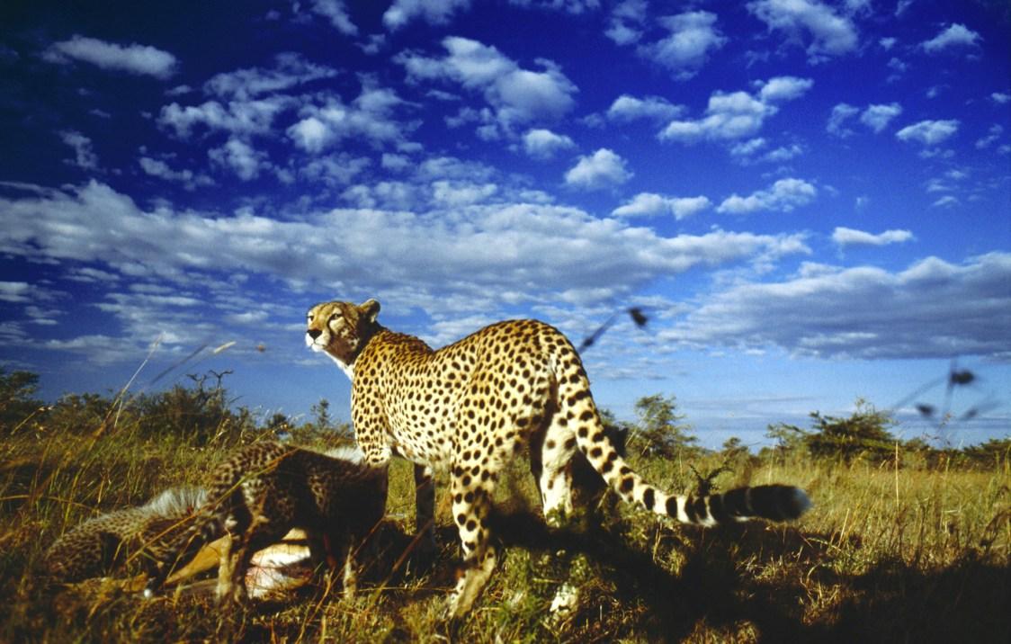 serengeti-1