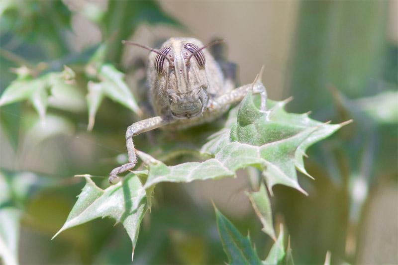 24_8809_grasshopper_800pix