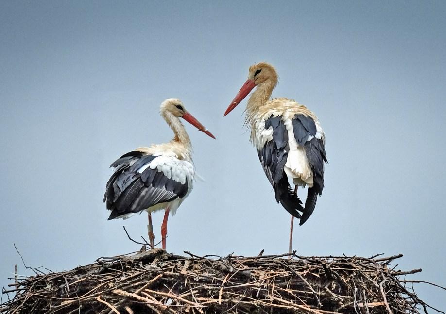 Stork Conversation