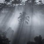 Balinese Jungle Sunrise