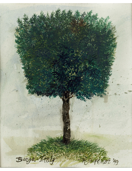 "Roy Superior, ""Round Tree, Barga"""