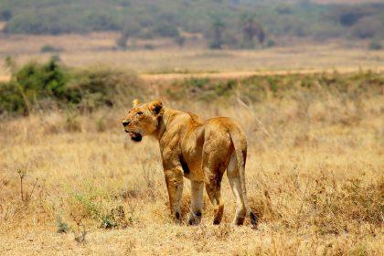 Nairobi National Park 48 hours in Nairobi