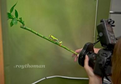 Frog Reptile Macro WS 010