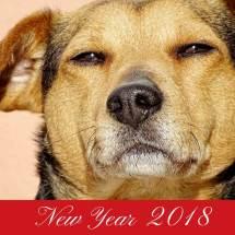 Год Собаки 2018 СМС Открытка