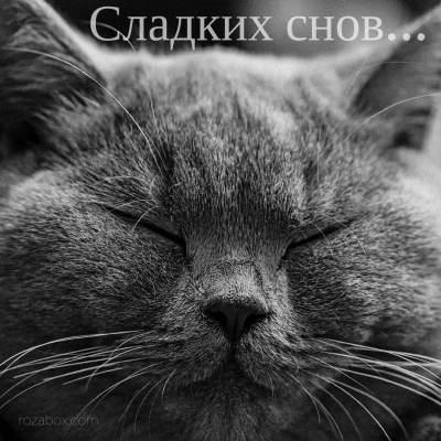 открытка с пожеланием сладких снов