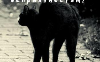 Прикольная картика Брысь проблемы, с черным котом