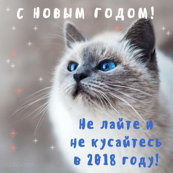 Новогодняя открытка 2018 год - RozaBox.com