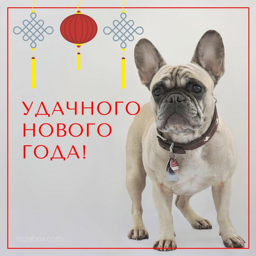 Новогодняя открытка с бульдожкой - RozaBox.com
