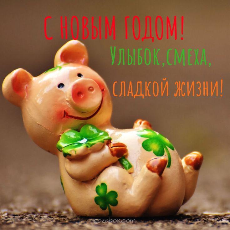 новогодние картинки со свинкой
