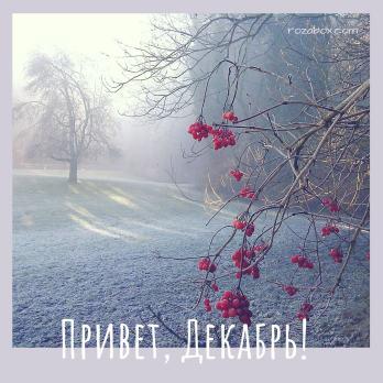 зимняя фотография привет декабрь