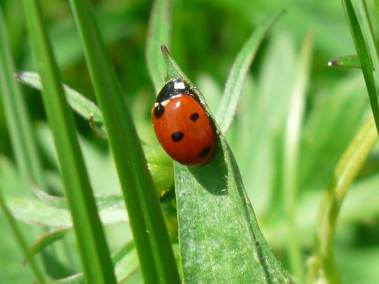 ladybug-54311_640