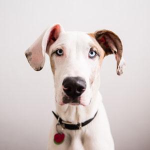 adoptable-dogs.jpg?fit=300%2C300&ssl=1