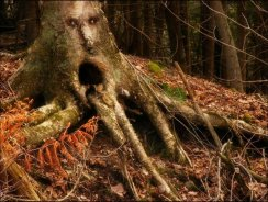 426101__enchanted-forest-tree-face_p