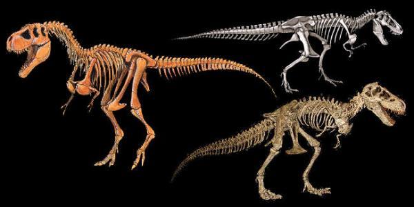 Imagens de esqueleto de tiranossauro encontradas na internet.