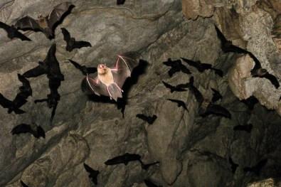 Swarm of Bats Img