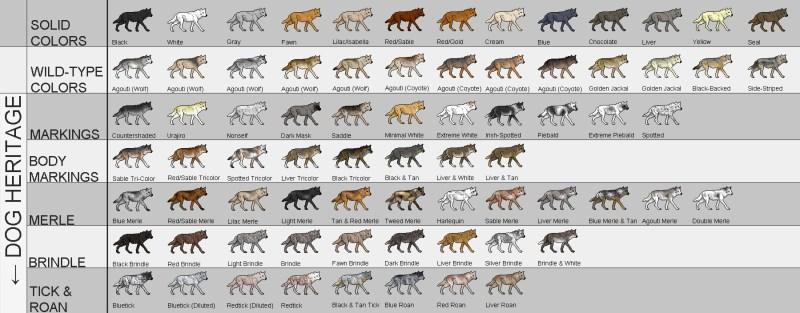 Dog Coat Color Genetics Calculator Todayss