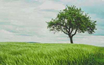 El árbol de la cuaresma – Josep Périch