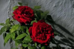 Si me amas… (Jn 14,27-31a) – Santi Casanova