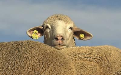 Pascua 4B – La crisis es de pastores, no de ovejas – Juan Carlos de la Riva.