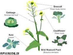 पादप में प्रजनन के चरण/पद एंव महत्त्व | Plant Breeding In Hindi | PDF