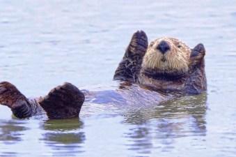 Otter 2 det very best