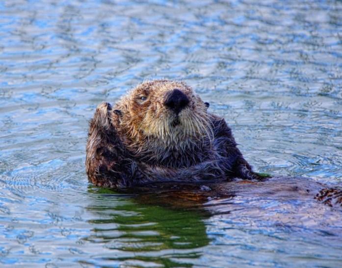Otter bath 1 det best