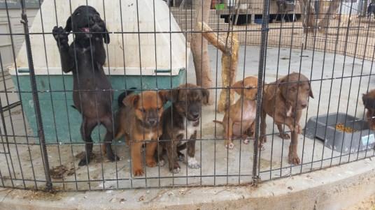 Pups Sept