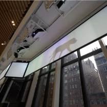 AKC Museum Visual Display