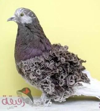 صور طيور نادرة و أجمل صور طيور قد تراها في العالم مجلة رقيقة