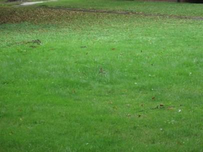 Wer findet das 2. Kaninchen?