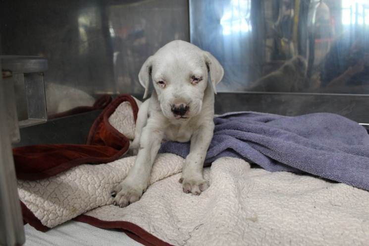 Ash when he first arrived at Rescue Ranch in early July