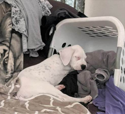 Ash Lava Fire Pup Finds Forever Home