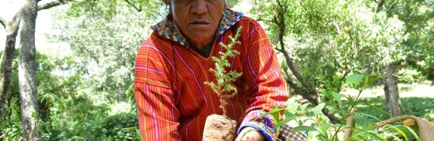 INAB invita a reforestar para restaurar, en el Día Internacional de la Madre Tierra