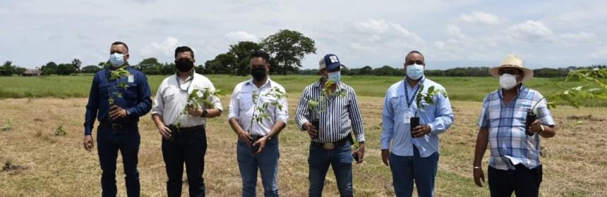Guatemala restaurará 3 mil hectáreas de bosques en la Costa Sur