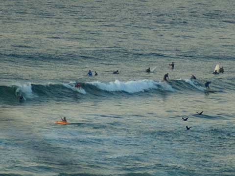 Not too many waves escaping the crew at Dee Why beach this morning.