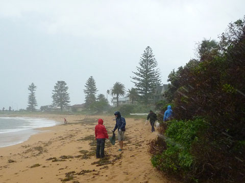Driving rain didn't drive off the hardy rubbish hunters from Surfrider northern beaches.