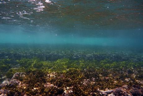 Reef at crosswaves