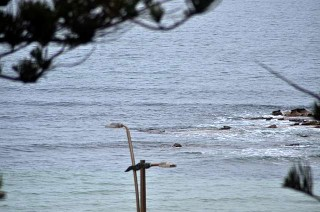 Dee Why Point 0830